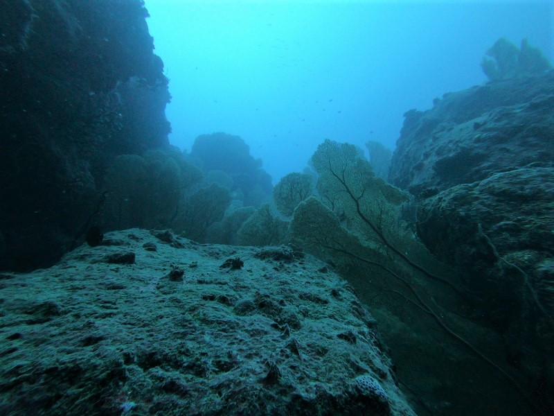 gorgone maurice