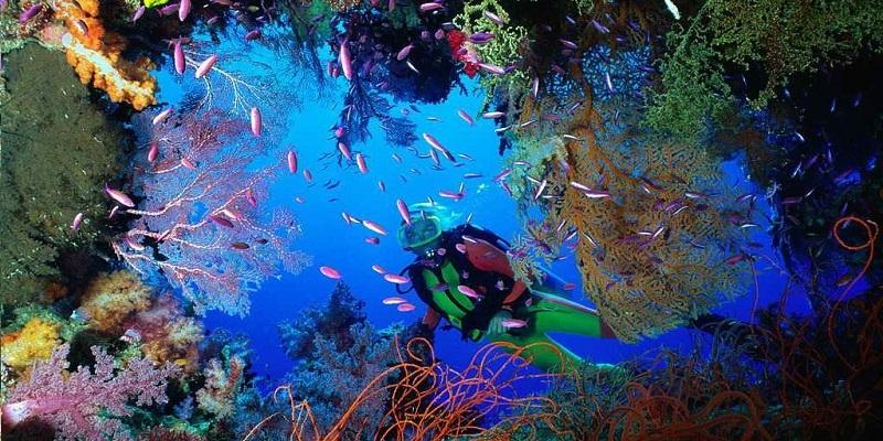 Scuba diving french polynesia bora bora