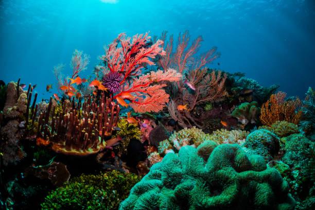 grande barrière de corail caractéristiques
