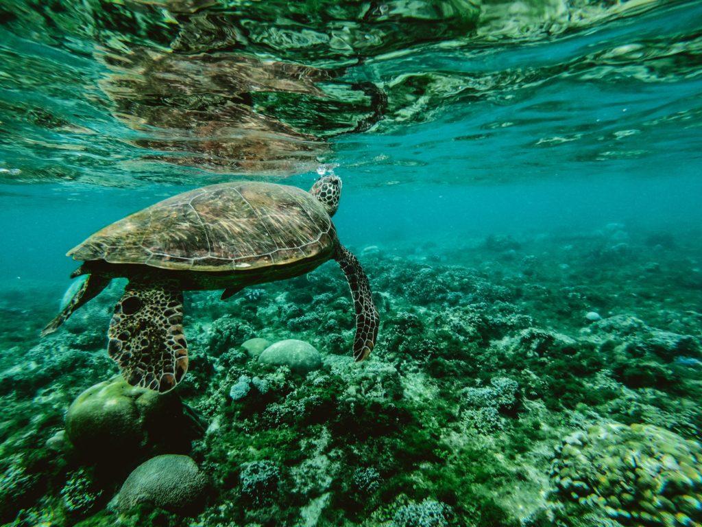 protection du corail