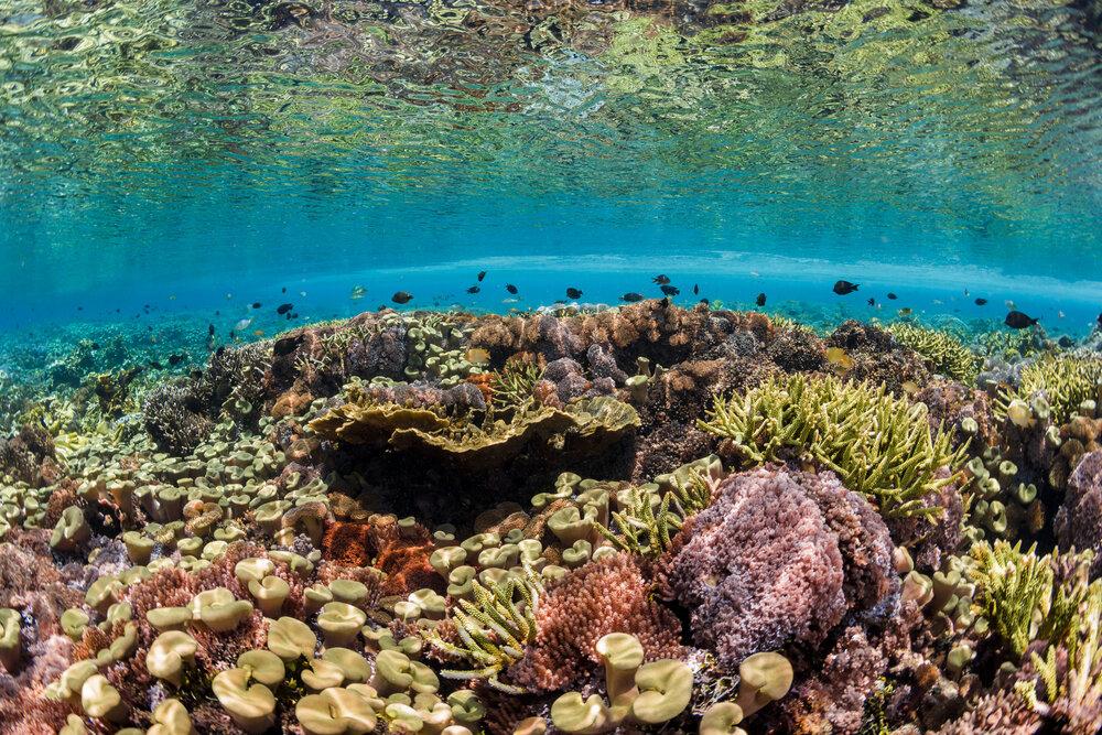 coraliculture-1