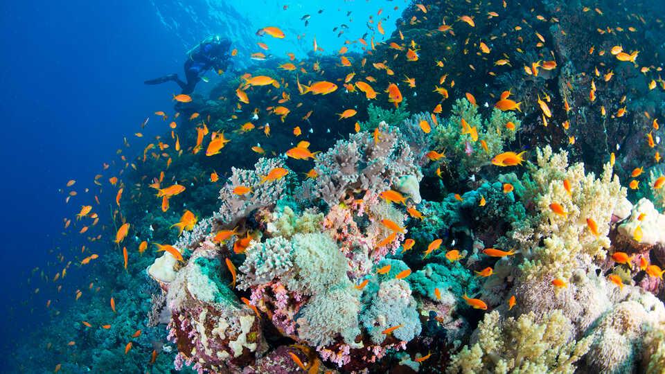coraliculture-2