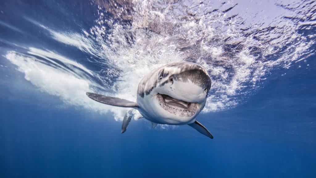 Peur des requins