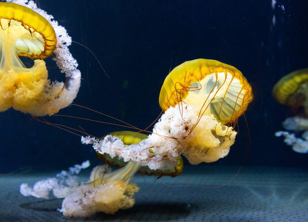 invasions de méduses 1