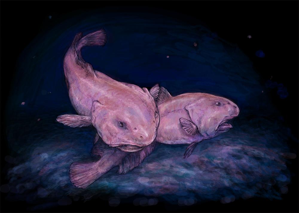 poisson le plus laid