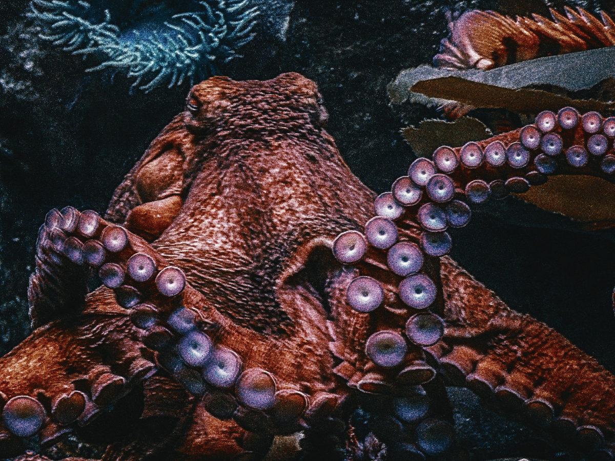 la-pieuvre