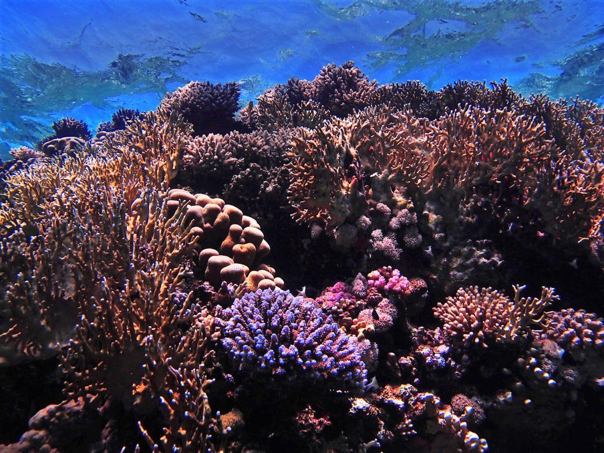 vacances de plongée en egypte